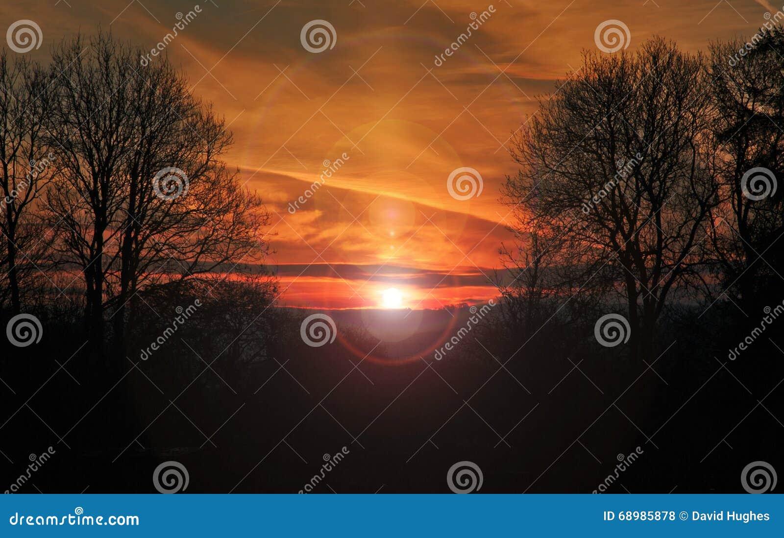 Tawny Sunrise a través de árboles