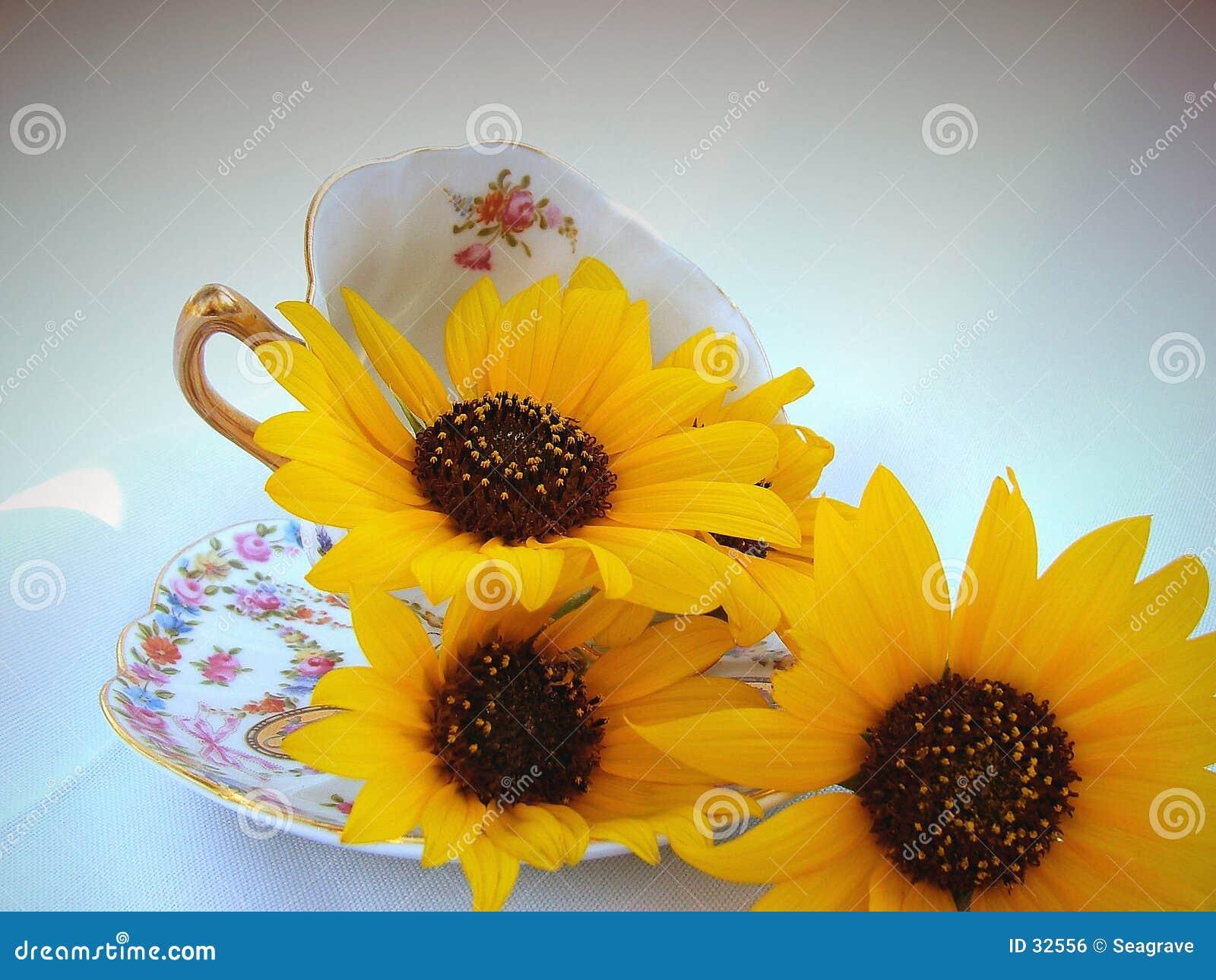 Download Taza de flores foto de archivo. Imagen de girasoles, objetos - 32556