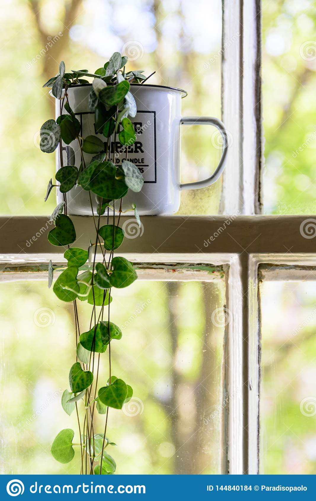 Tazza d annata dello smalto con un interno della pianta verde su una struttura della finestra bianca del telaio con gli alberi su