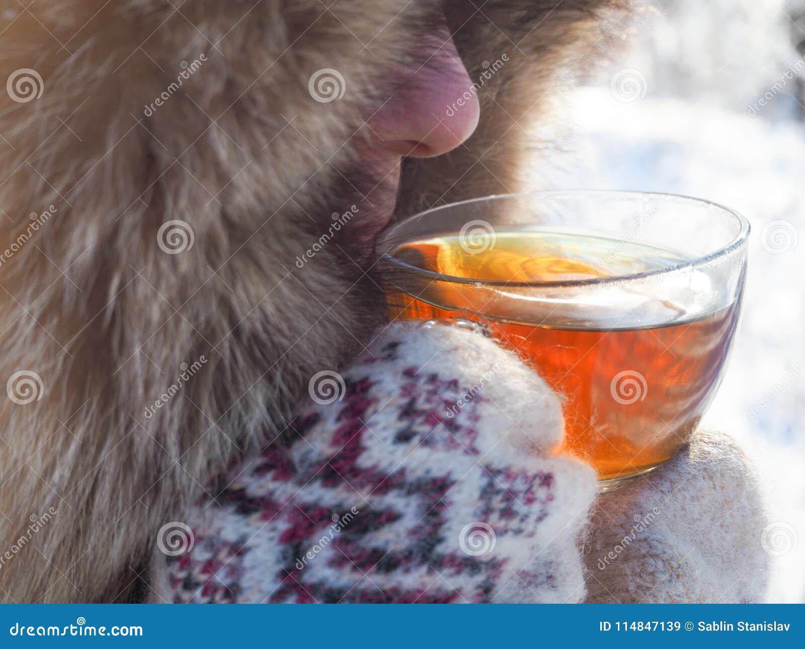 Te i den nätta kvinnan för vinterskog A dricker te i kallt väder