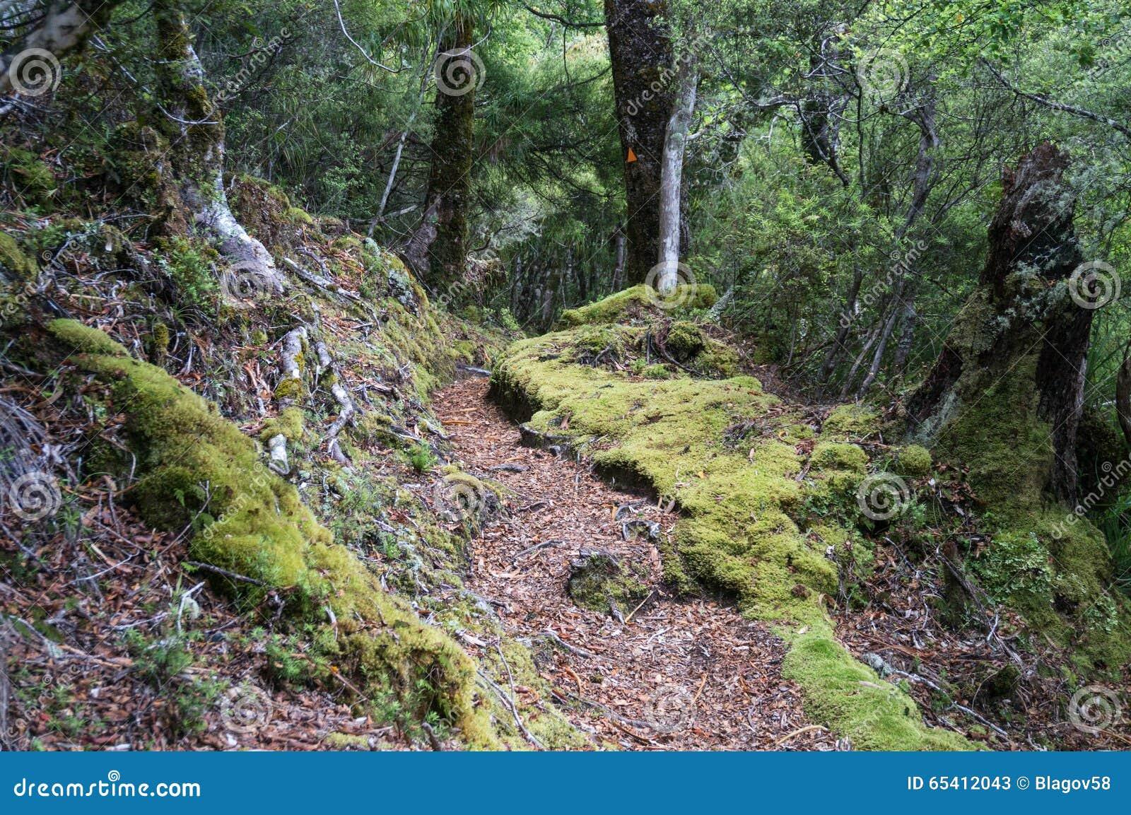 Te Urewera National Park Walk Stock Image - Image of