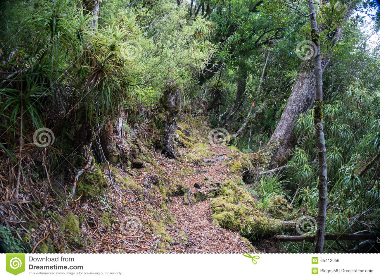 Te Urewera National Park Walk Stock Photo - Image of track