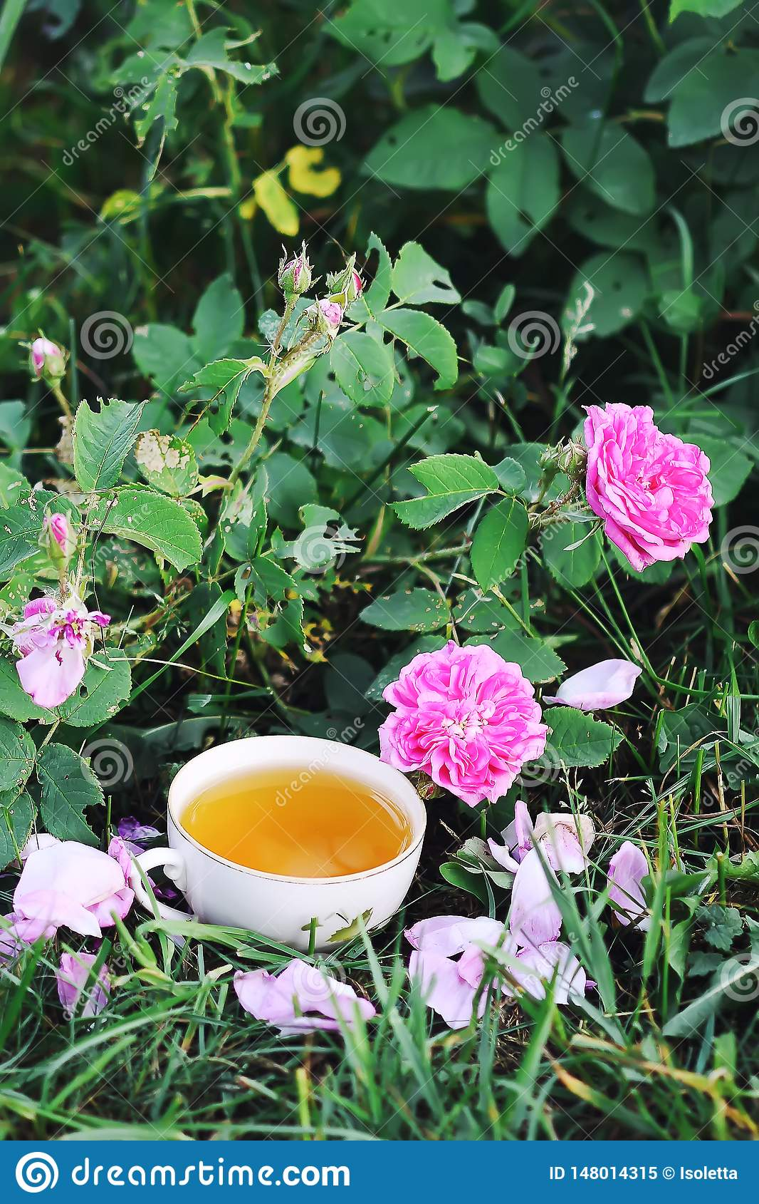Tea in country style in summer garden in the village. Vintafe cup of green herbal tea and blooming pink roses in sunlight