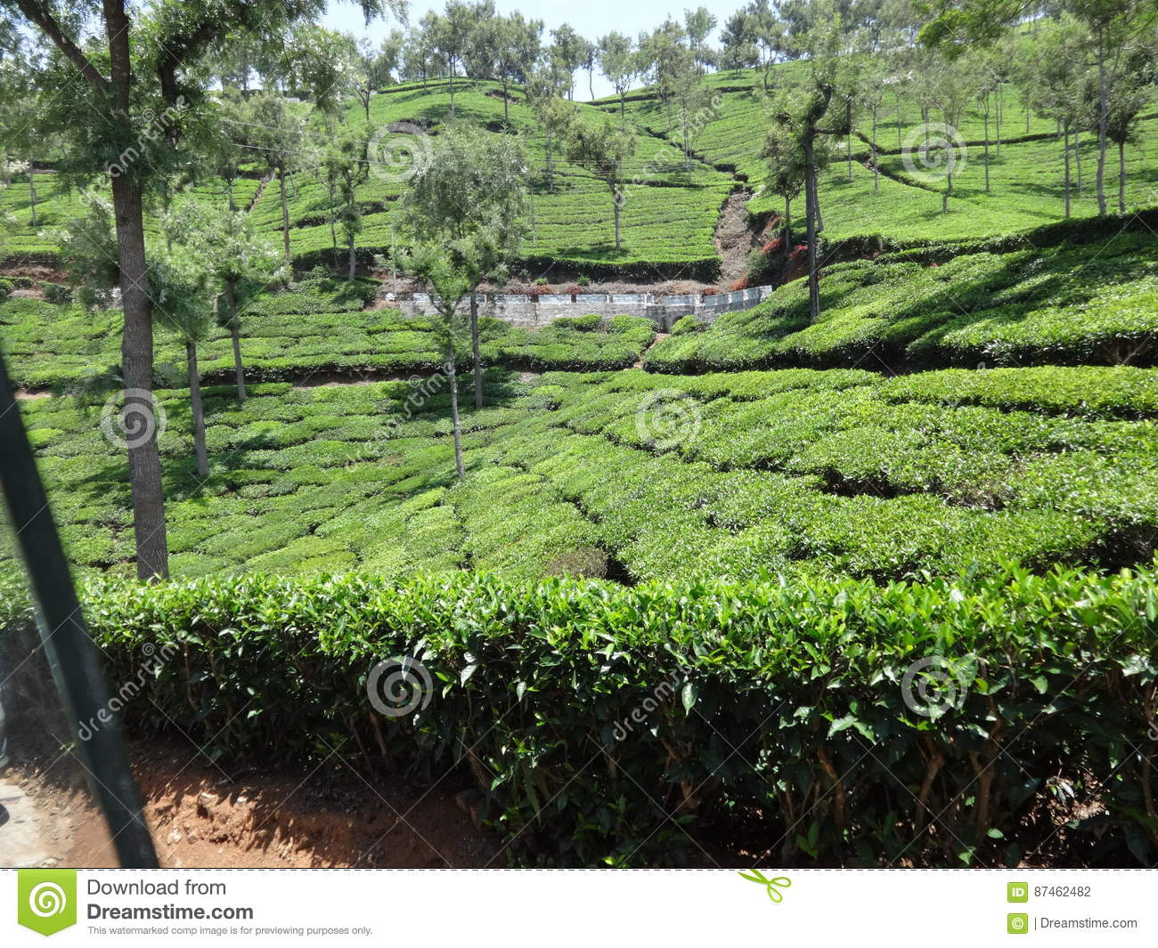 Ooty Garden Very Awesome Flower View Stock Photography