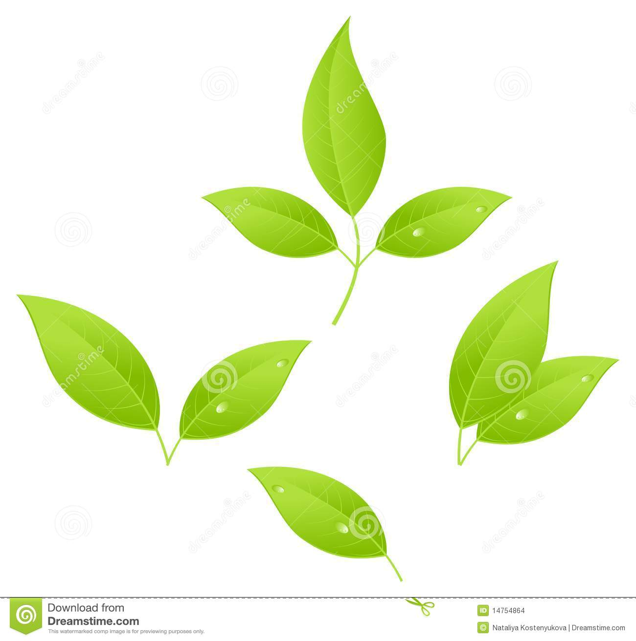 Tea leaves, young saplings. Vector illustration, isolated on a white.