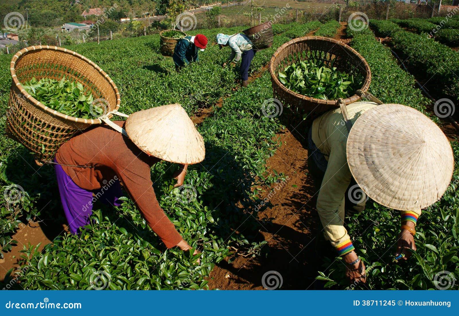 how to say tea in vietnamese