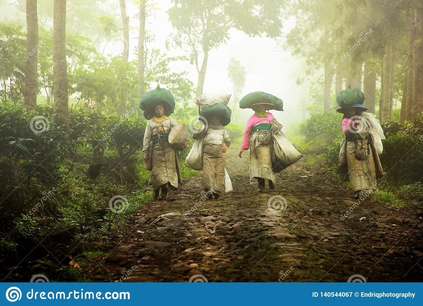 The tea picking farmers came home after taking tea leaves in the fields. Wonosari Lawang East Java January 21, 2019