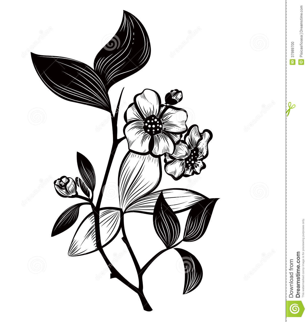 Camellia Flower Line Drawing : Tea plant stock vector image of drawing tree camellia