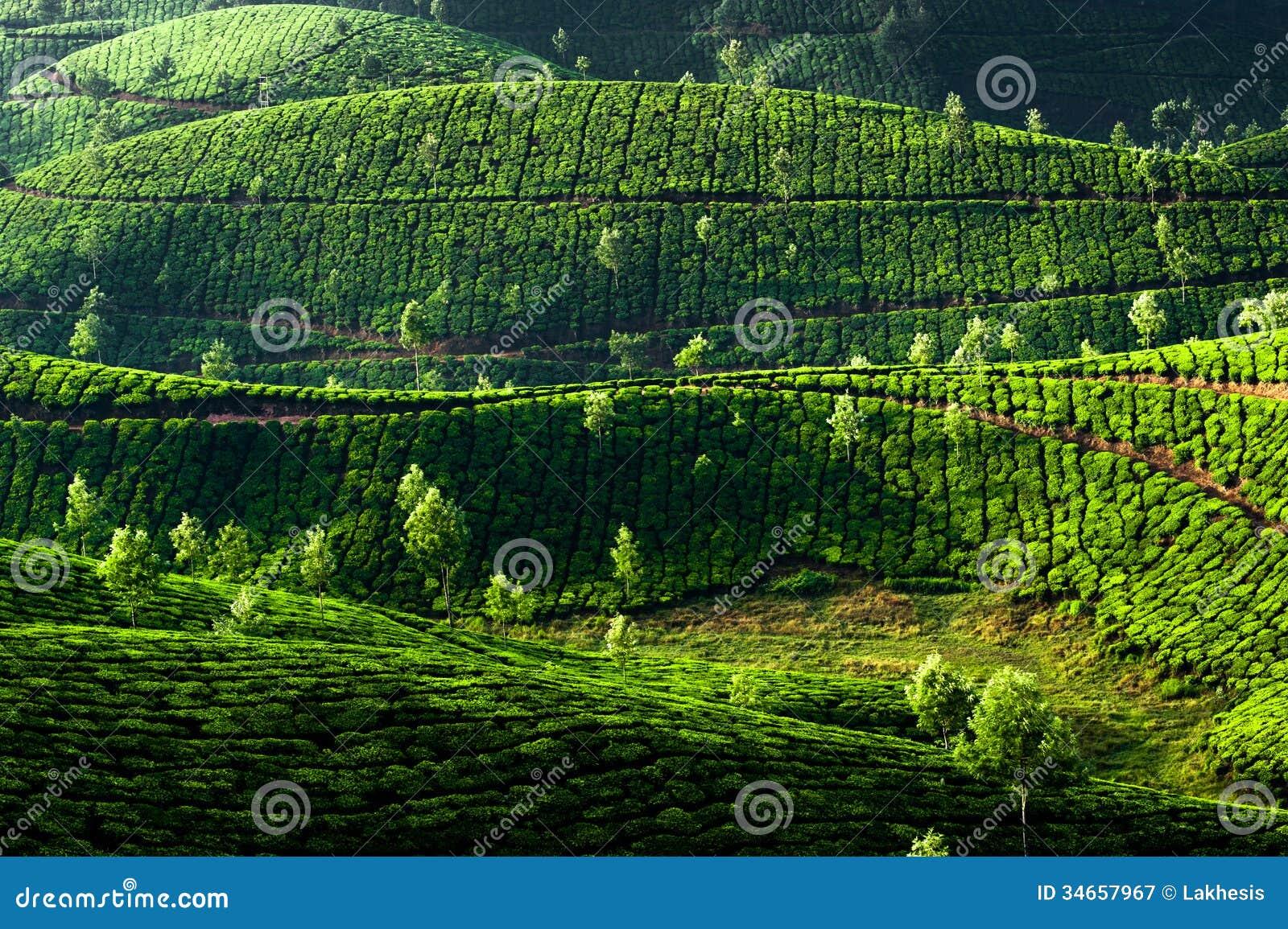 Landscape. Munnar, Kerala, India Royalty Free Stock Photography ...
