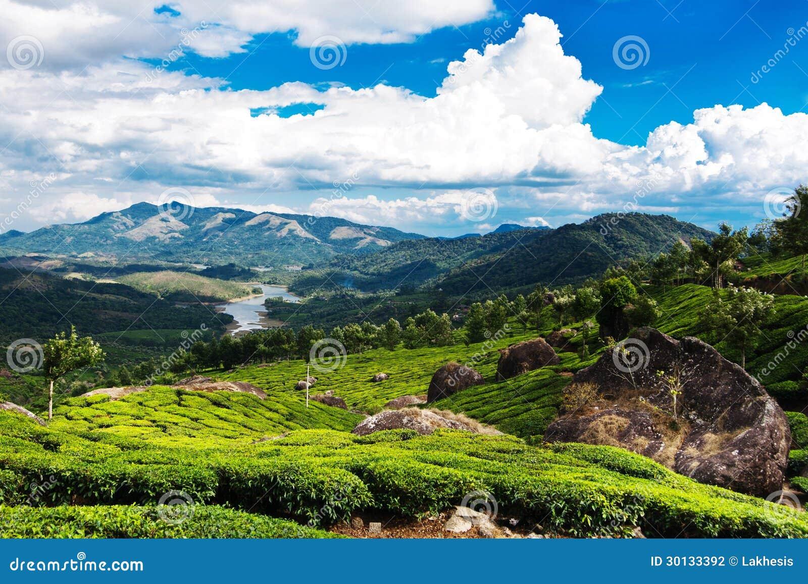 Tea plantation landscape under blue cloudy sky. Munnar, Kerala, India.