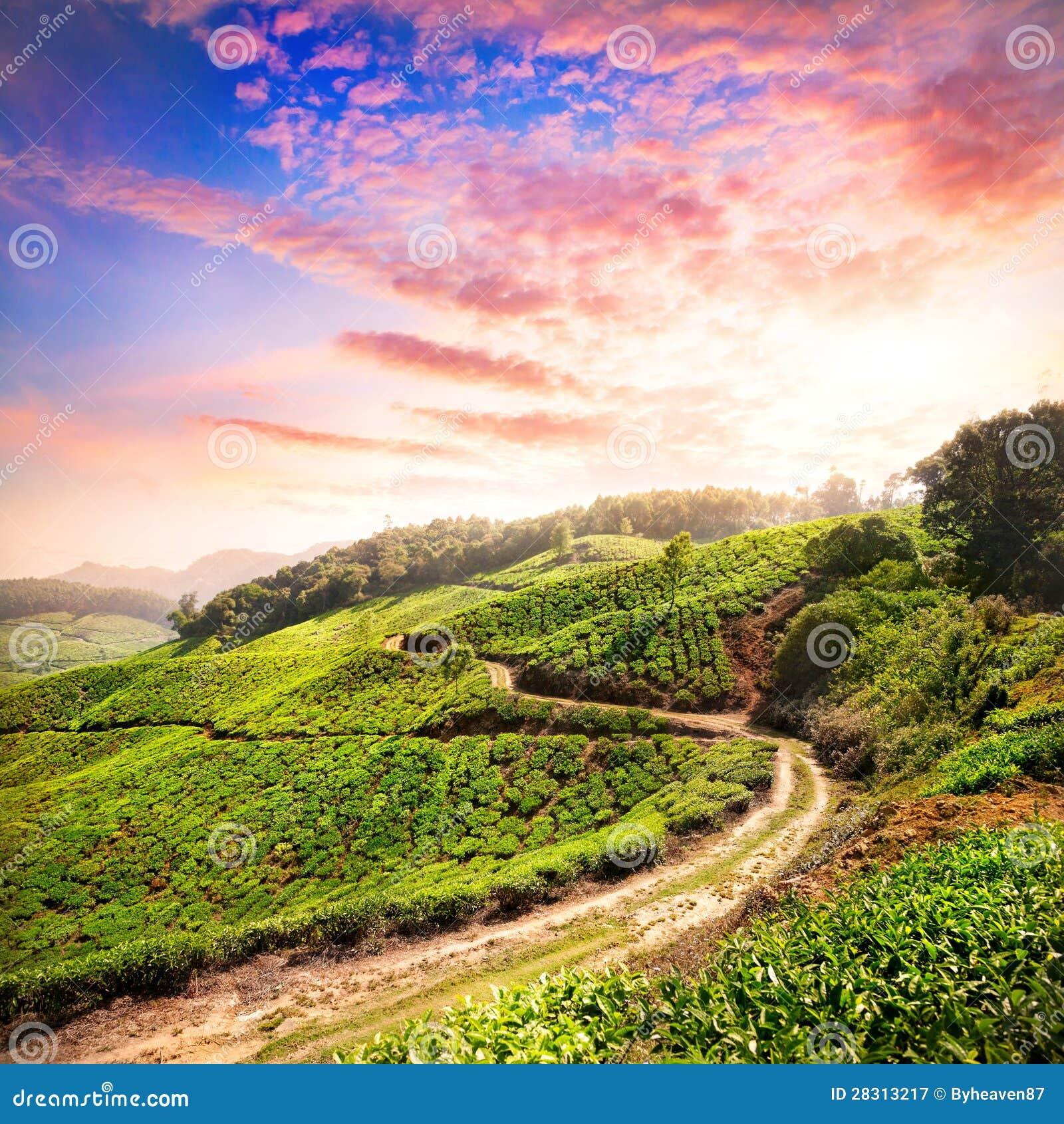 Tea Plantation In Munnar Royalty Free Stock Photography ...