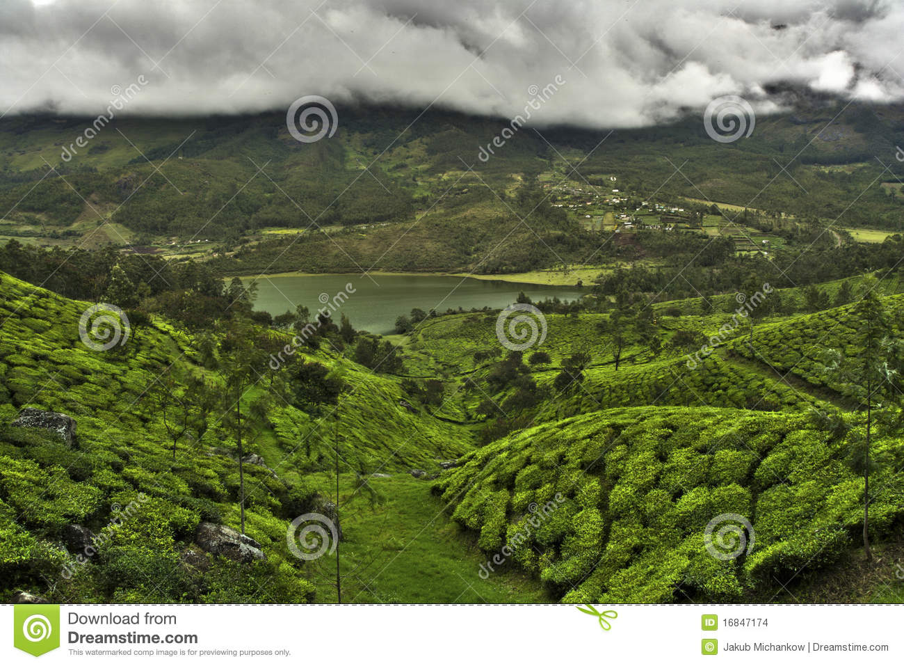 Download Tea plantation valley stock photo. Image of heavy, asia - 16847174