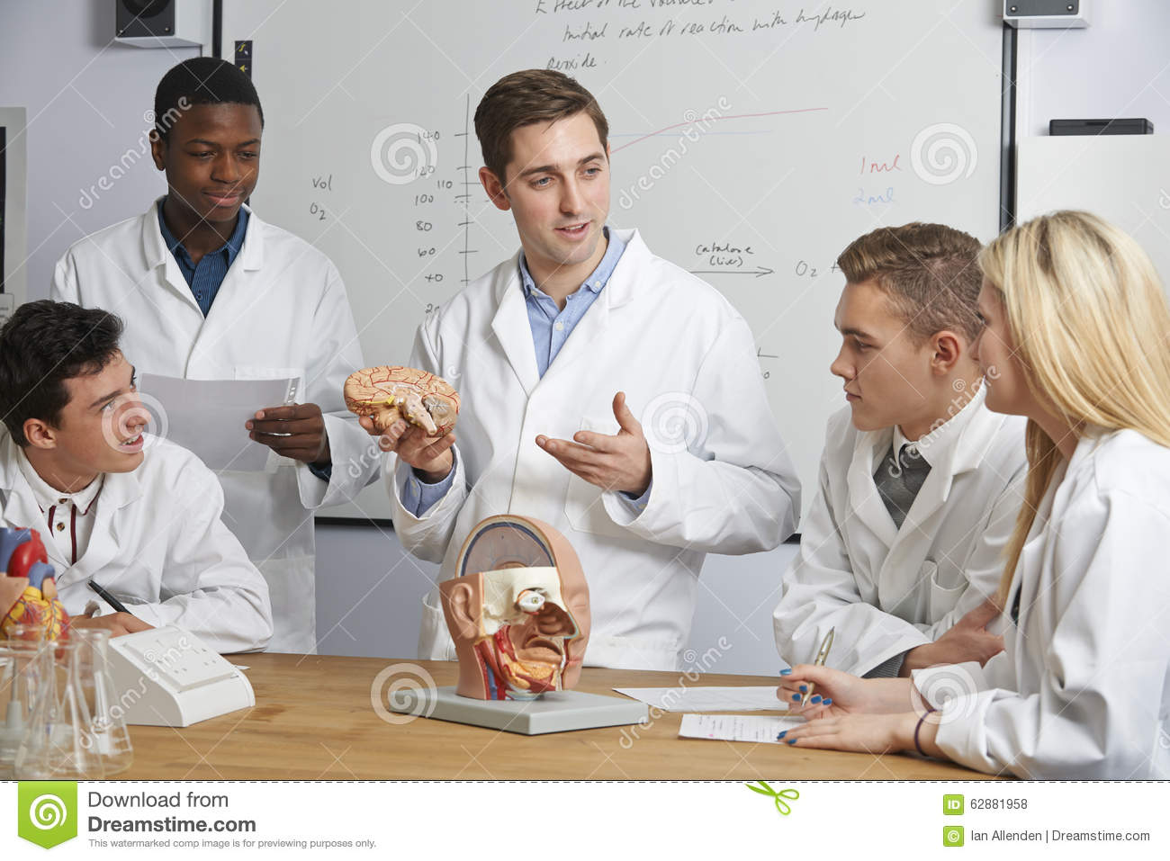 Teacher With Model Of Brain In Biology Class Stock Photo - Image of