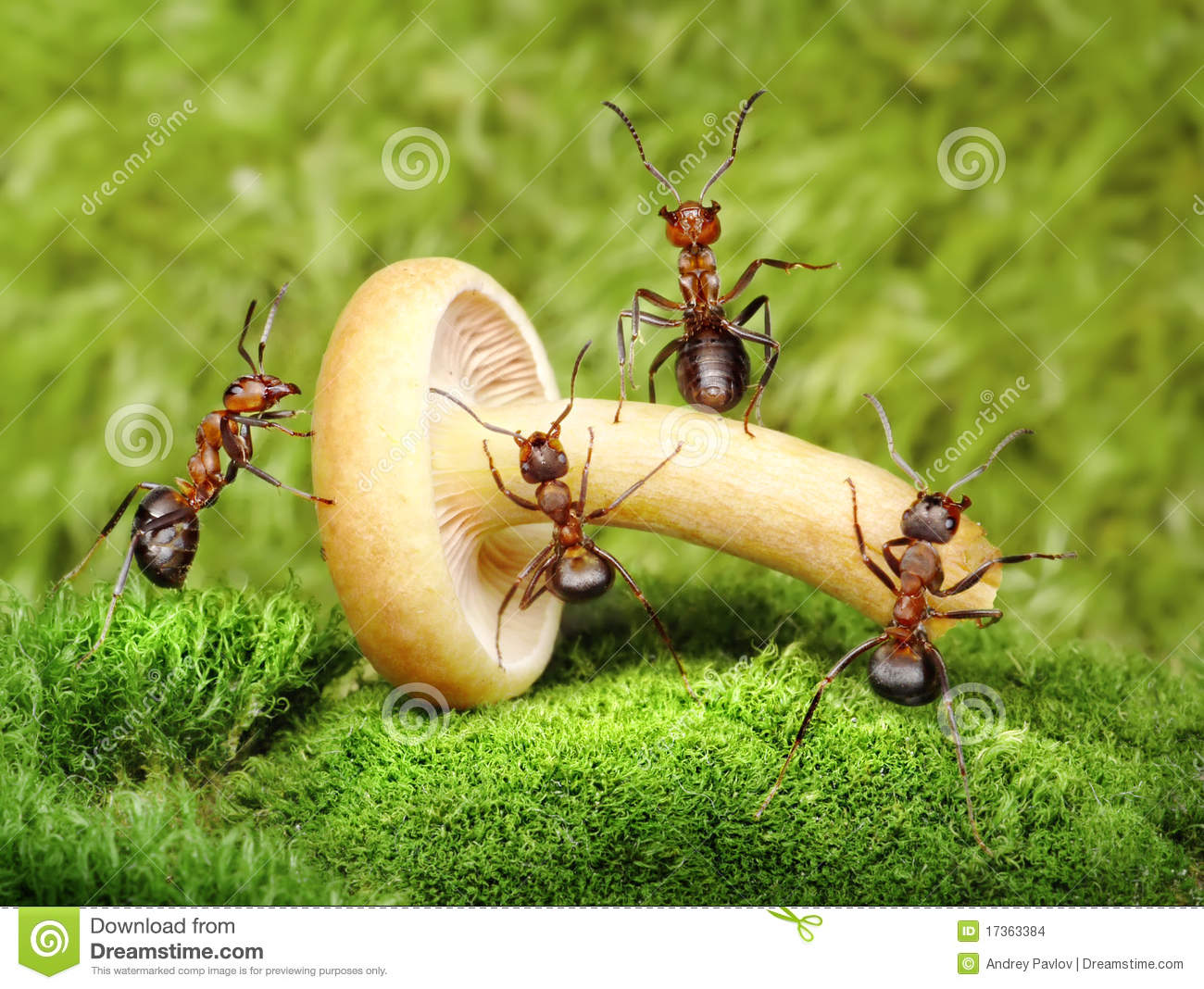 Team Of Ants Work With Mushroom, Teamwork Stock Images - Image ...