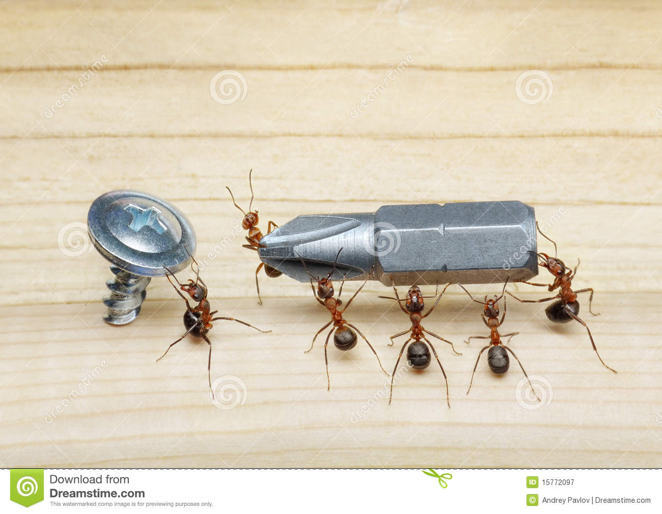 Team of ants work with screwdriver, teamwork