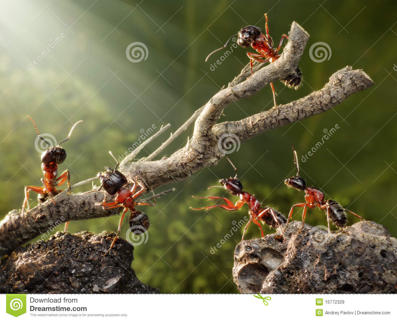 Team Of Ants Work With Tree, Teamwork Royalty Free Stock ...