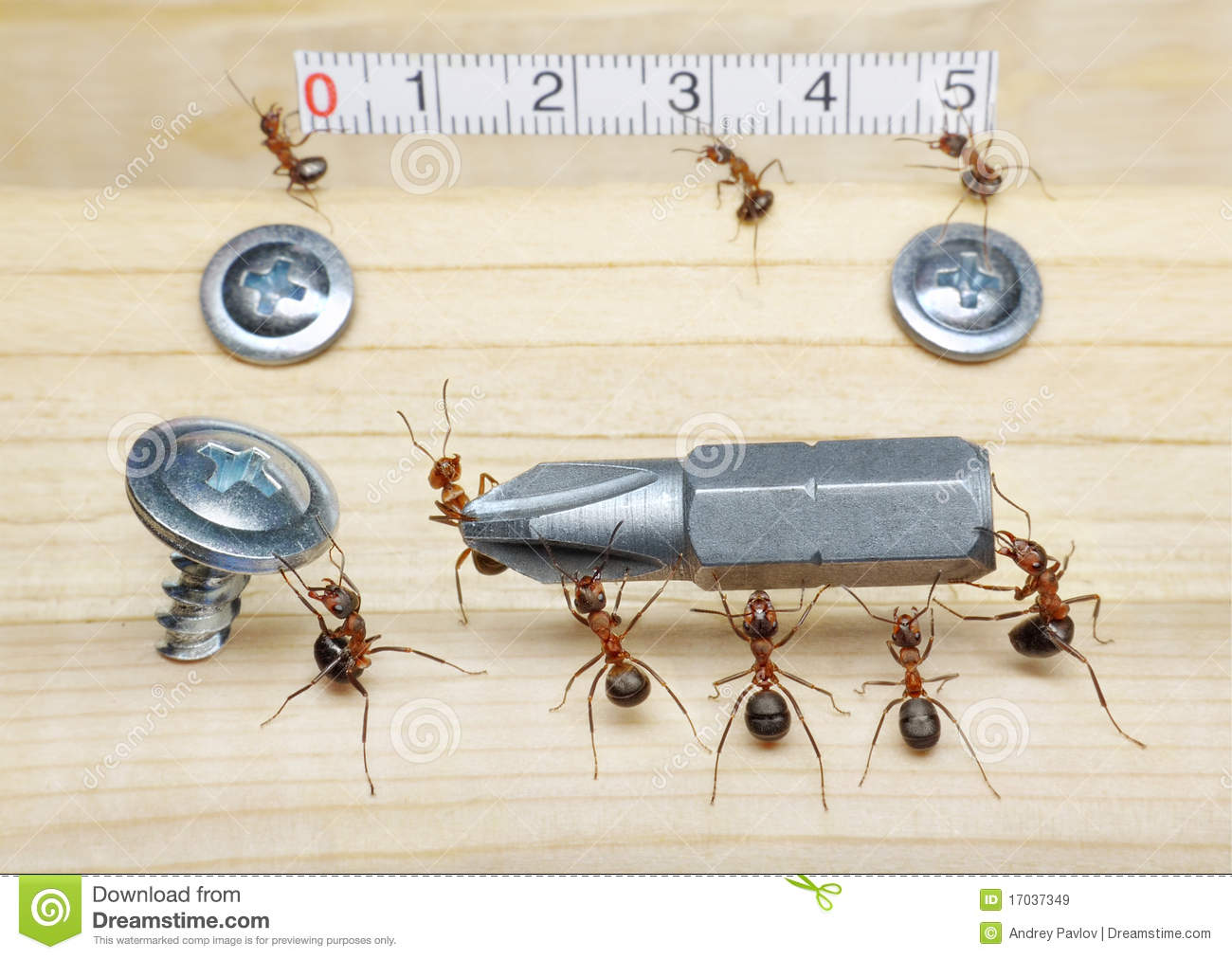 Team of ants works constructing, teamwork