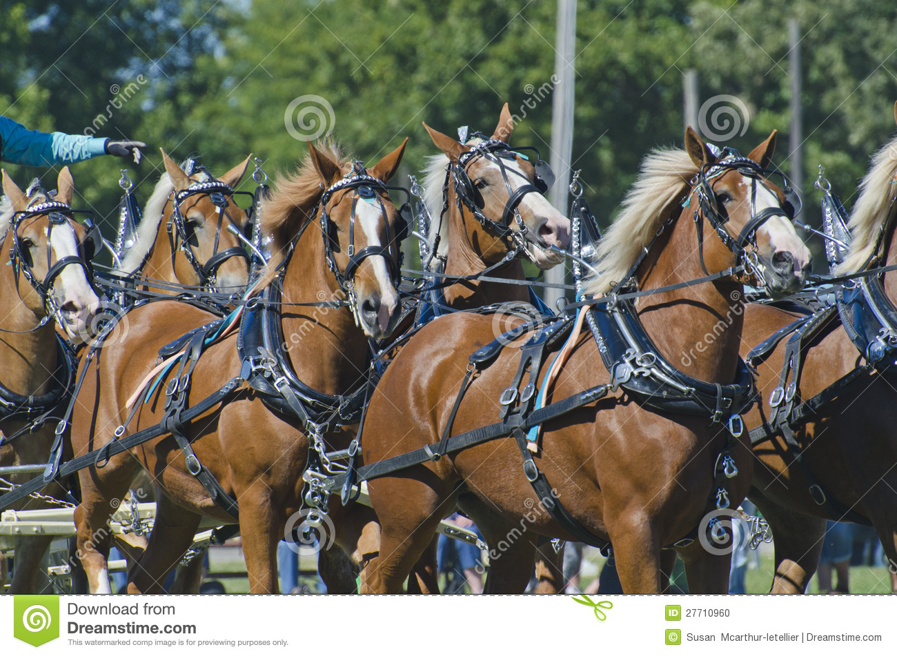 Stock Image Plan Drawing Image2936911 in addition Aws Migration Planning Roadmap in addition Watch together with Do Ho Su Sculptures moreover Stock Photo Team Belgian Draft Horses Country Fair Image27710960. on architecture blueprints