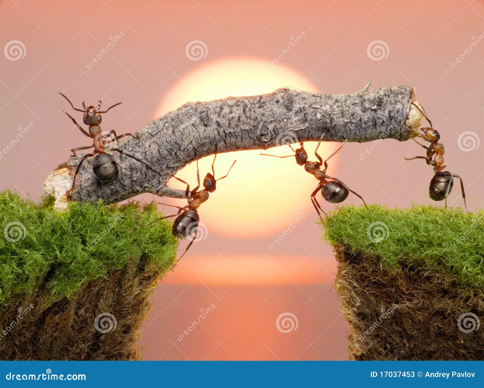 Team dat van mieren brug, groepswerk construeert