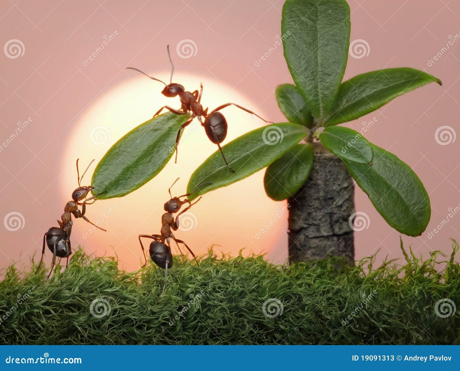 Team der Ameisen arbeiten mit Blättern der Palme, Teamwork