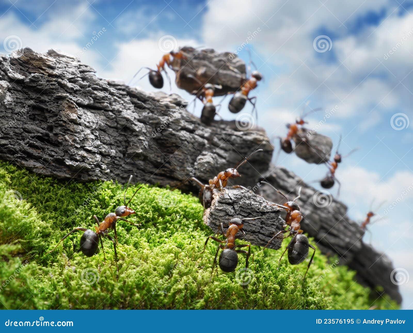 Team der ameisen die wand teamwork konzept costructing sind stockbild bild von idee felsen - Ameisen in der wand ...