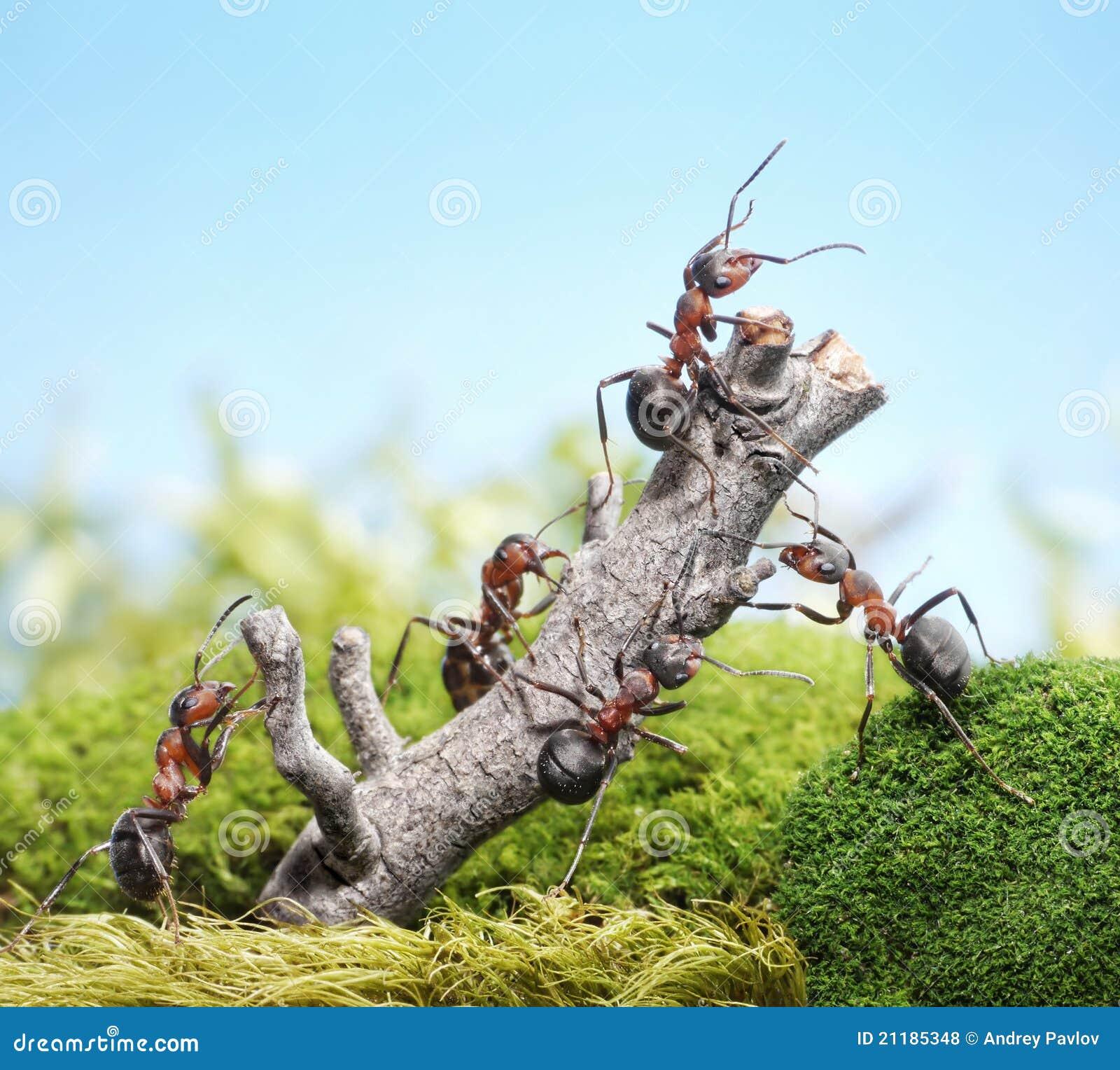 Team der ameisen und des verwitterten baums teamwork - Ameisen in der wand ...