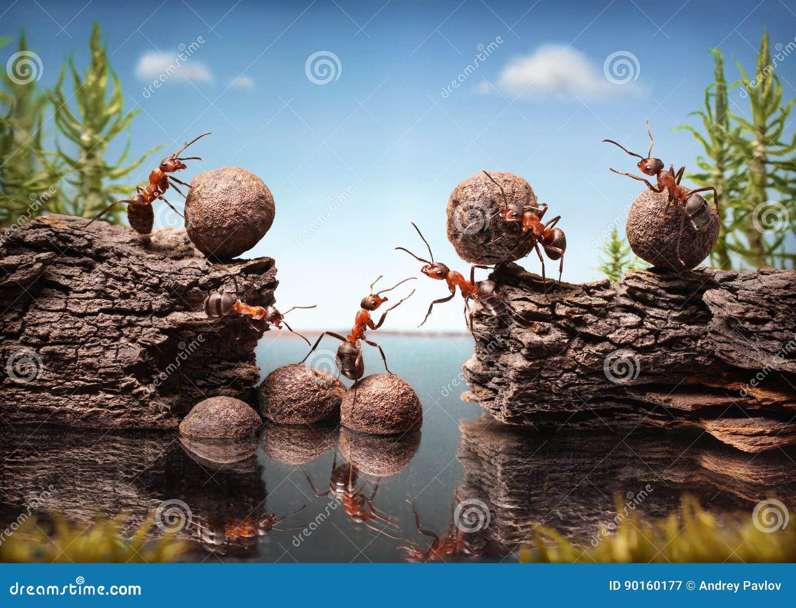 Team die van het mierenwerk dam, groepswerk construeren