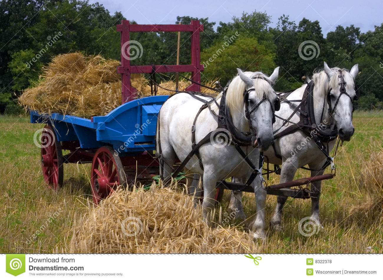 Midwest Living House Plans Team Of Horses Pulling Farm Hay Wagon Royalty Free Stock