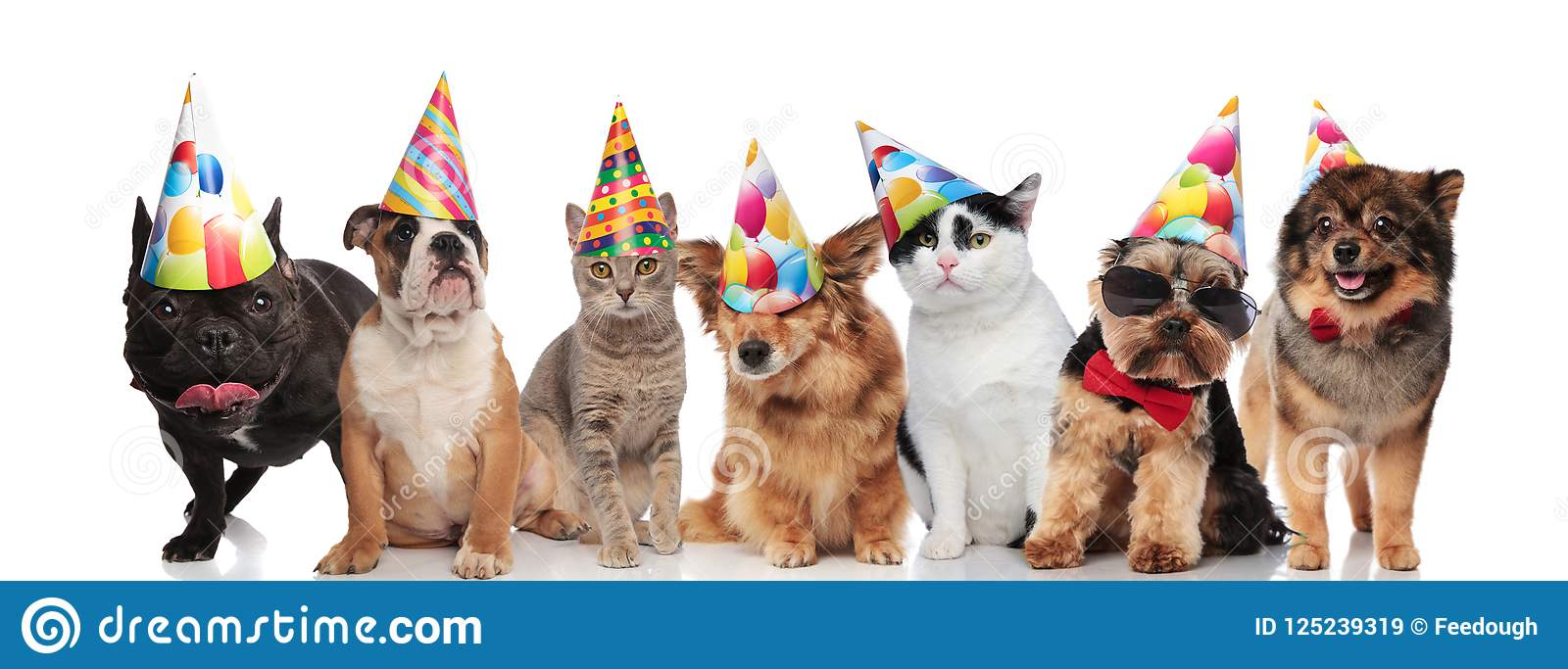 Team Of Seven Happy Cats And Dogs Wearing Colorful Birthday Hats While Standing Sitting Lying On White Background
