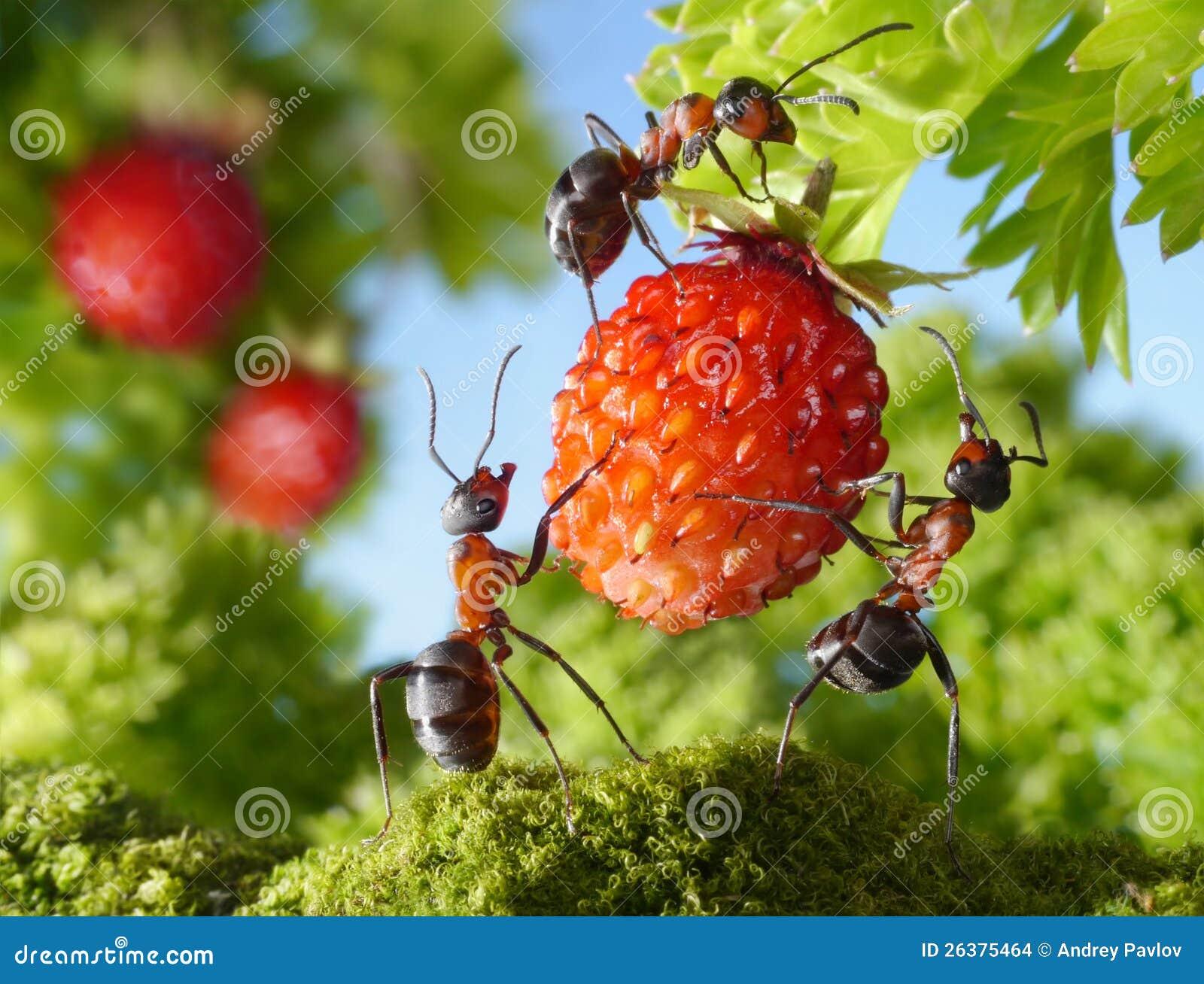 Team van mieren en aardbei, landbouwgroepswerk