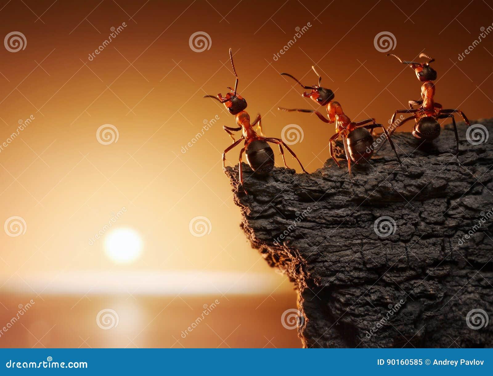 Team van mieren op rots het letten op zonsopgang of zonsondergang op zee