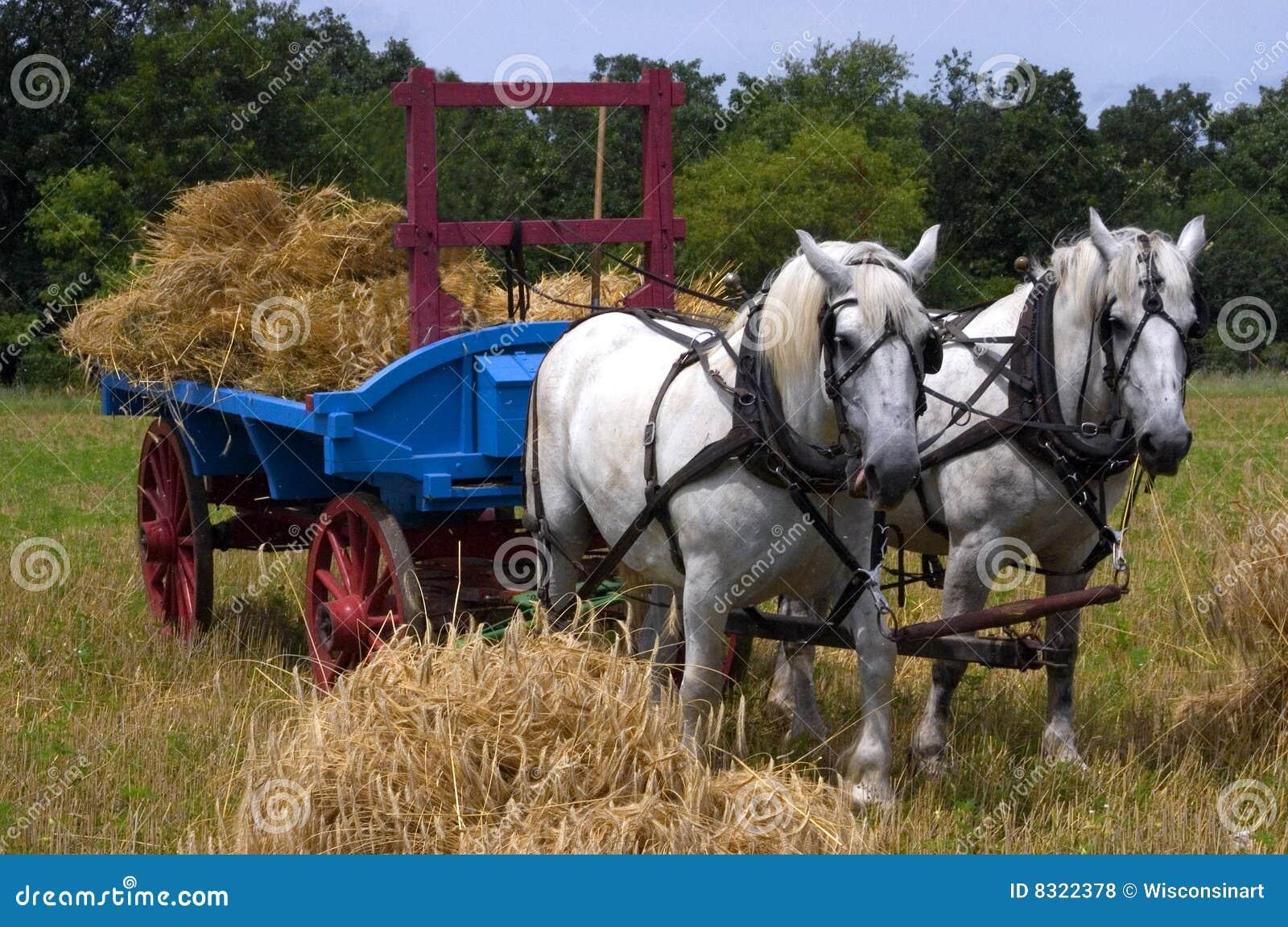 Team van Paarden