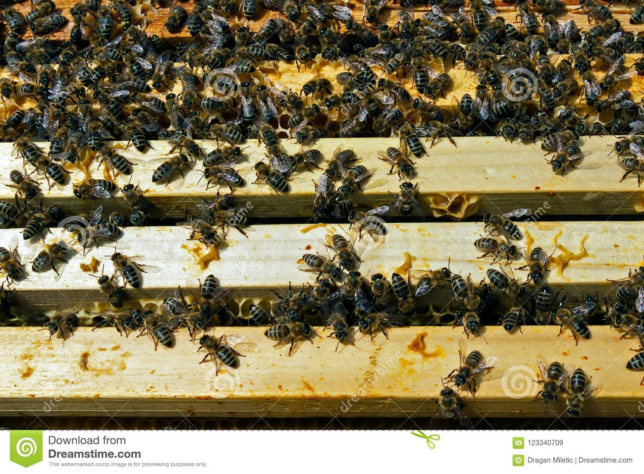 Download Teamwork In The Honey Production Inside Hive Box Stock Image - Image of farm, comb: 123340709