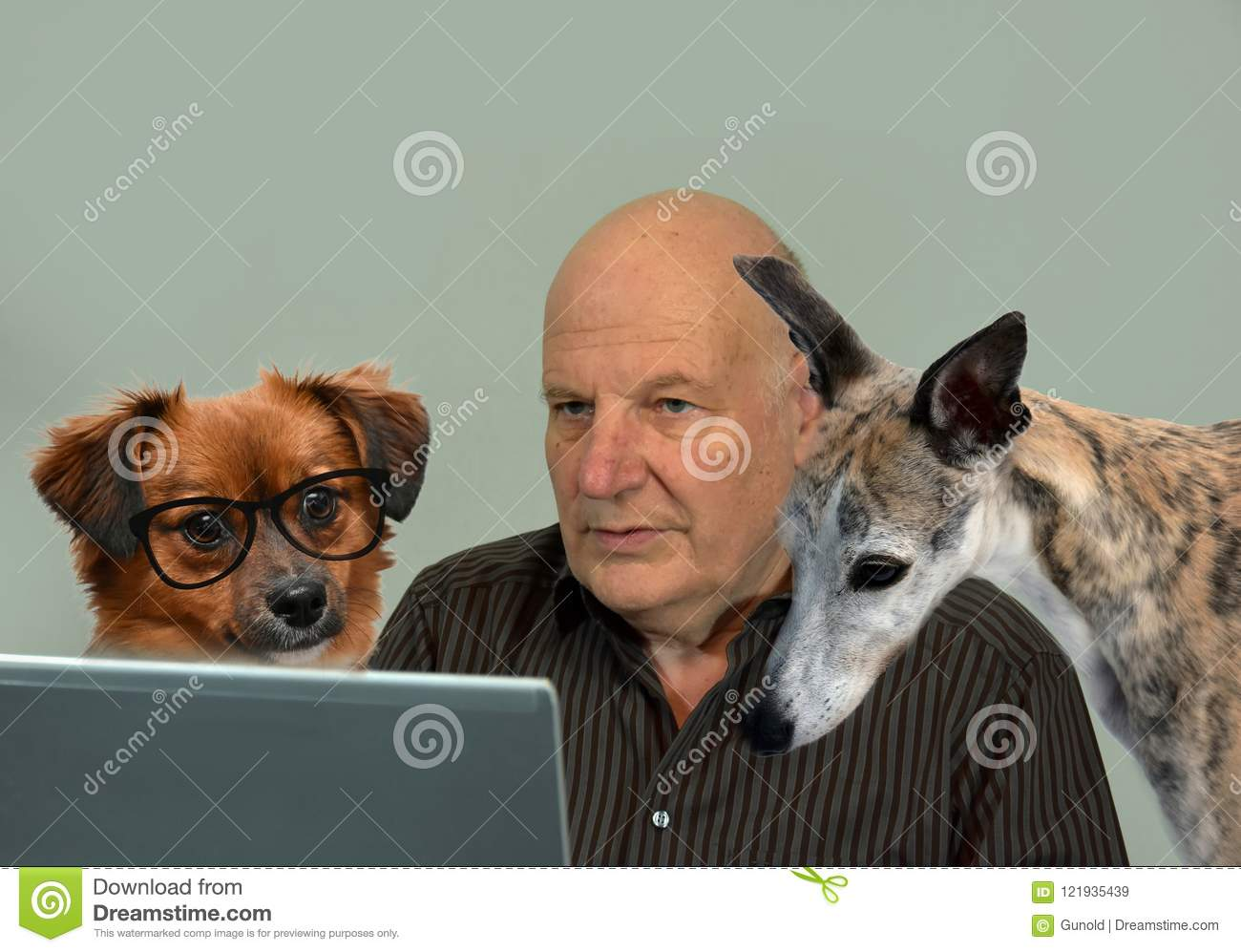 May we help you? Dogs and man working together, forming a tea
