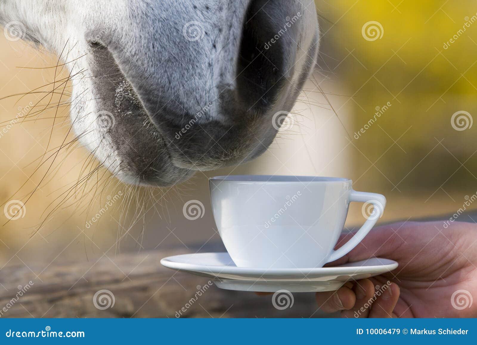 Лошадь на чай