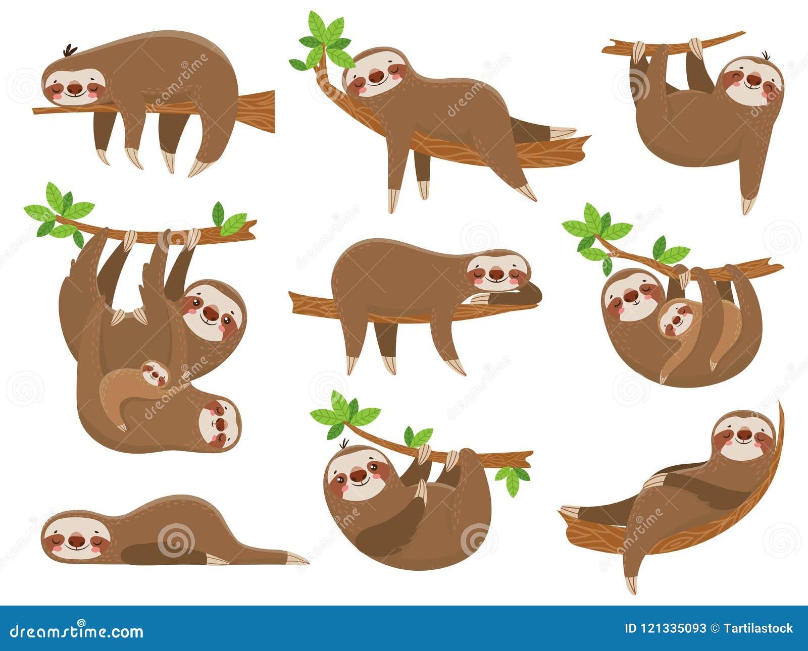 Tecknad filmsengångarefamilj Förtjusande sengångaredjur på roliga djur för djungelrainforest på tropisk uppsättning för vektor fö
