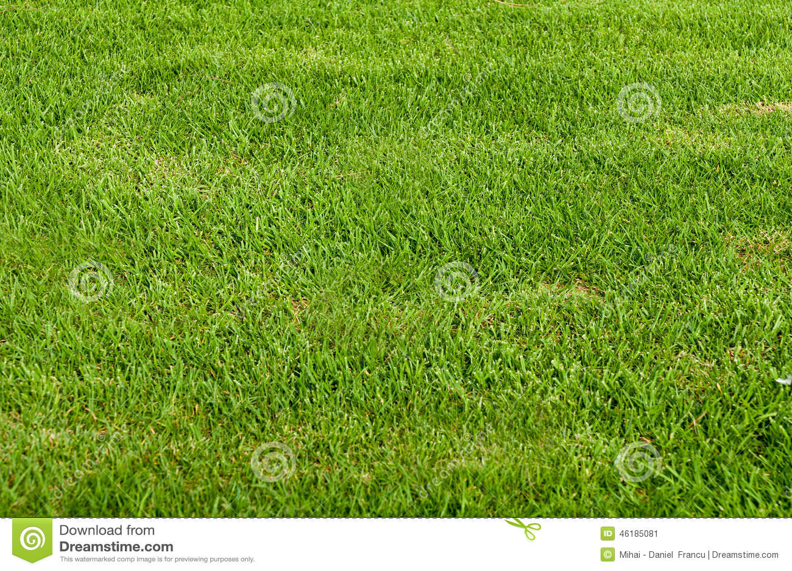 Tecknad illustration för fältgräshand