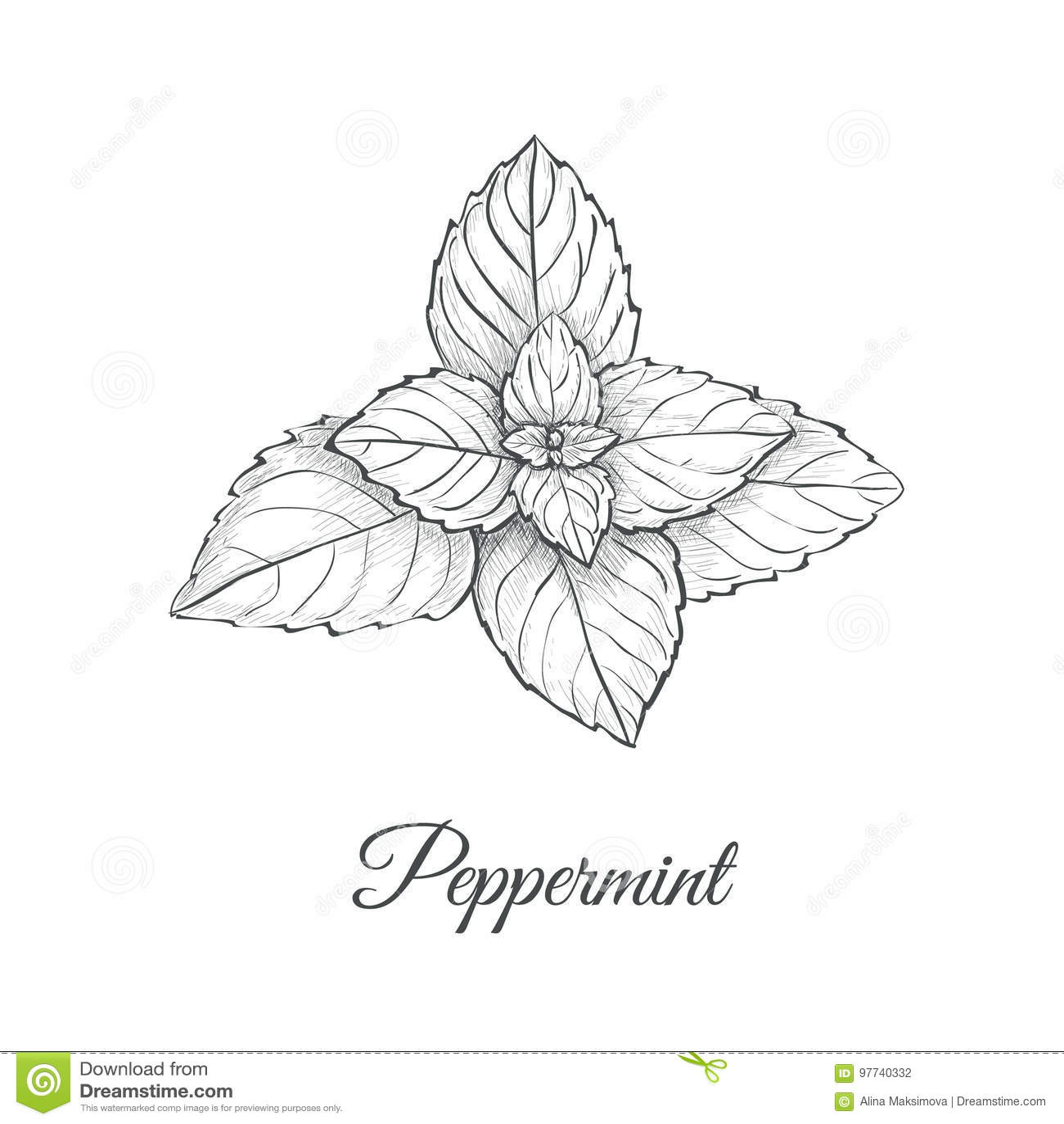 Teckning för pepparmintskechhand