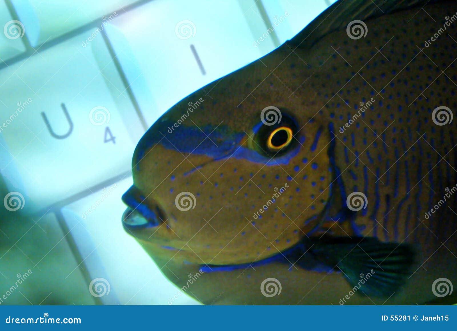 Teclado a pescado