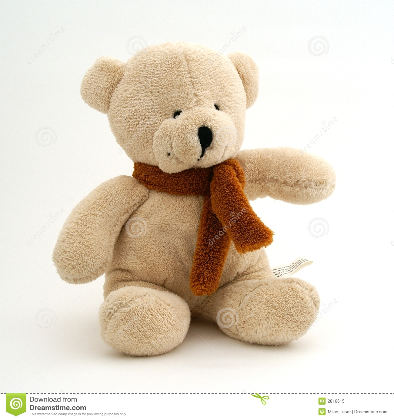 Image Result For Teddy Bear Portraits