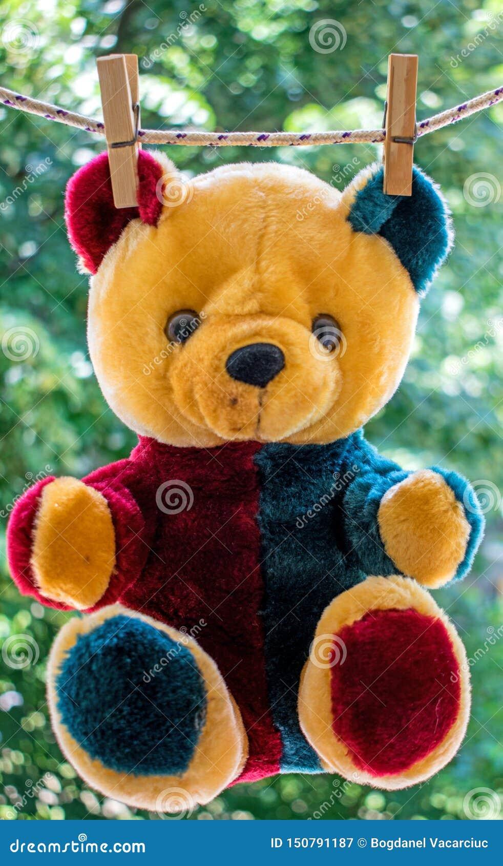 Teddy Bear após ter tomado um banho, o urso seca no sol no fio