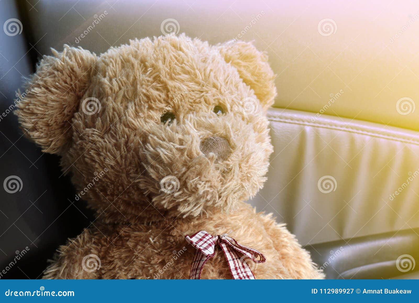 Teddy Bear Brown se cierra encima de la sensación sola en mi coche