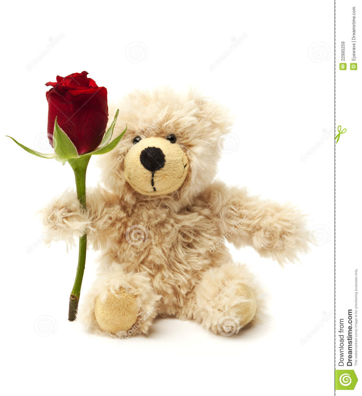 Teddy Bear Holding A Rose Royalty Free Stock Images - Image: 22995259