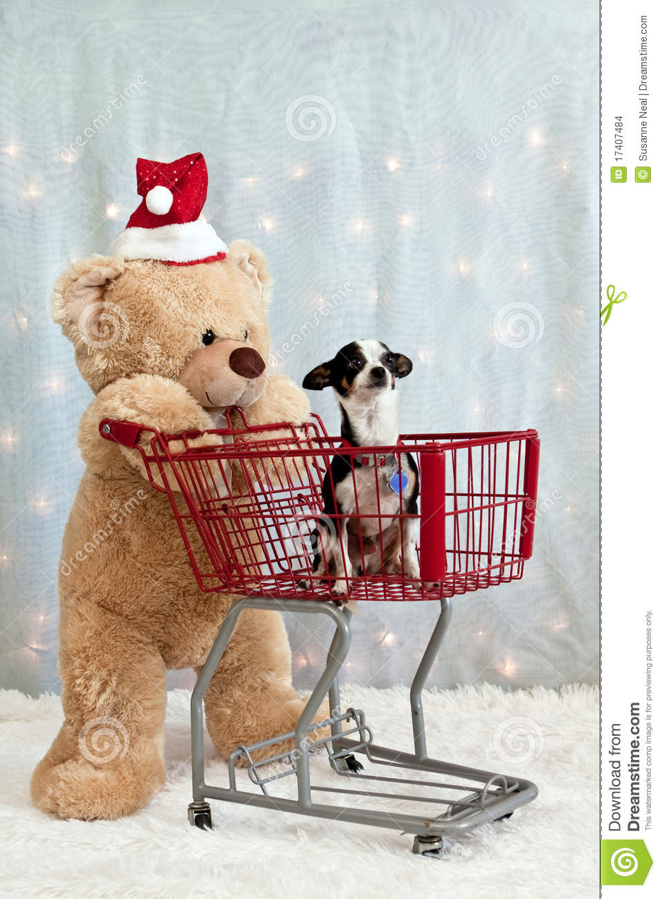 teddy bear  shopping cart  chihuahua stock images