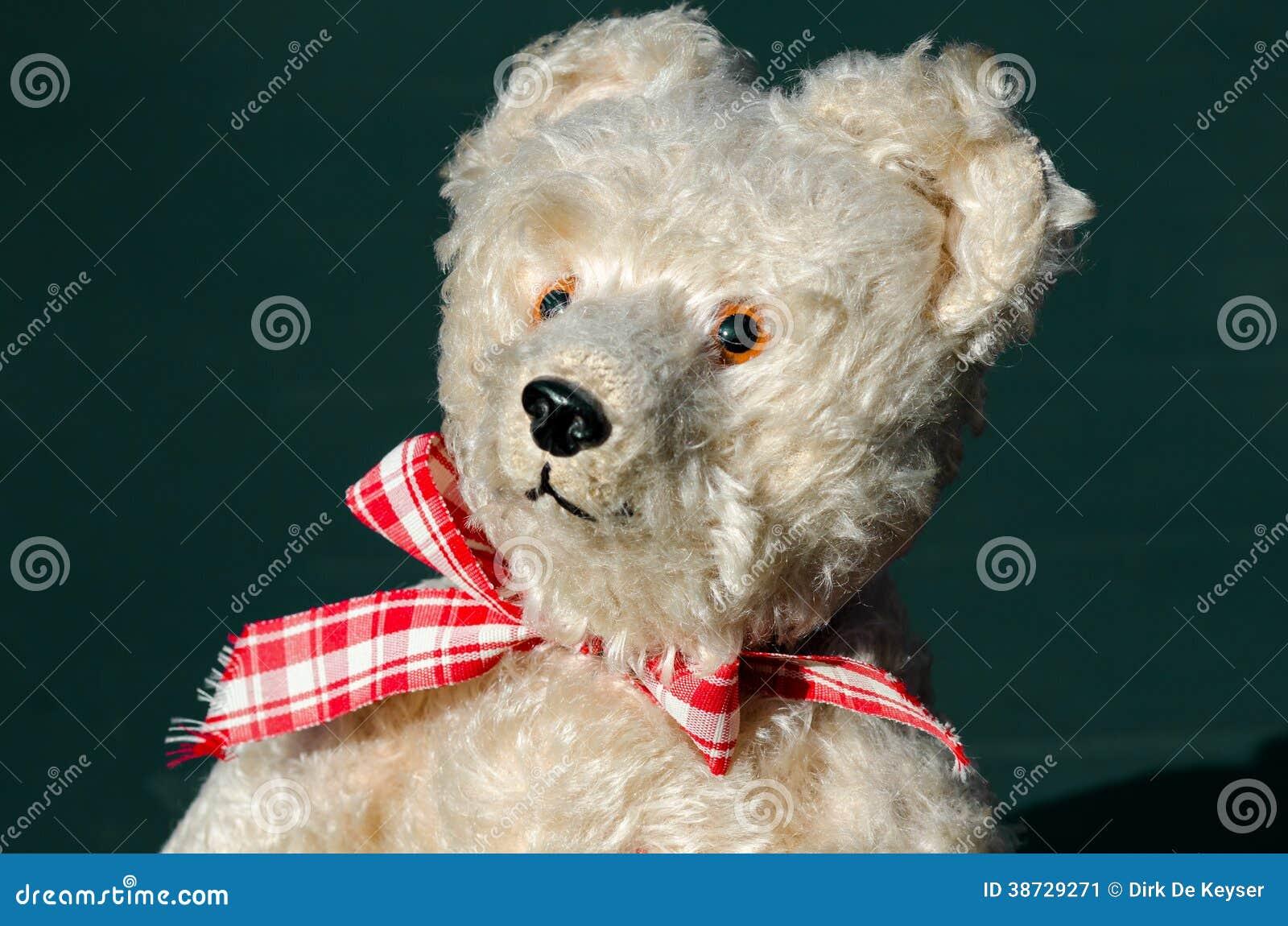 Teddy bear in the sun