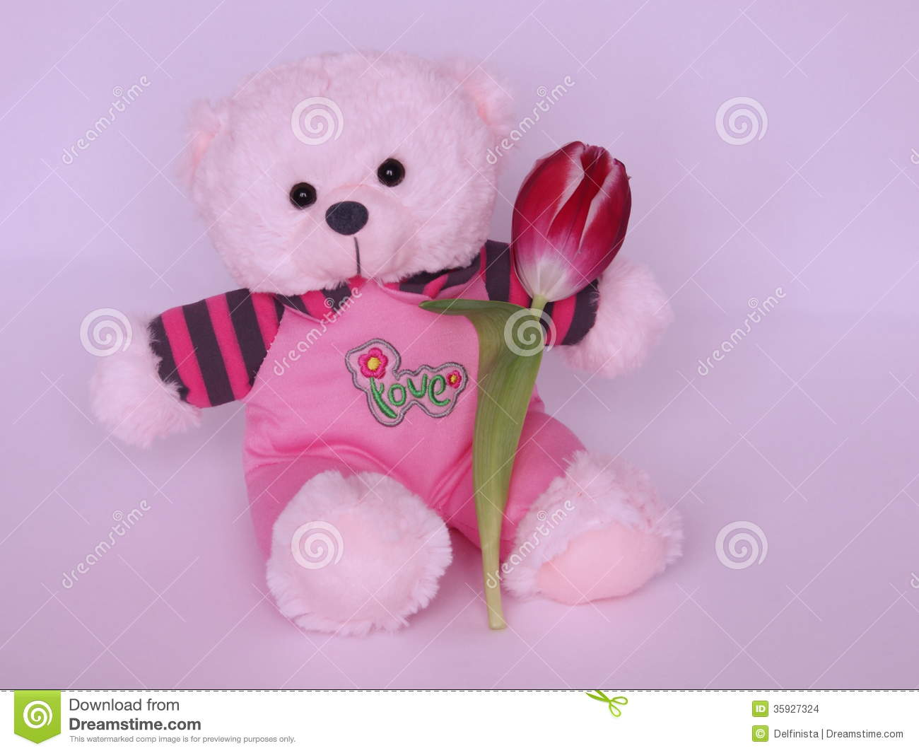 teddy bear with tulip - valentines day stock photos stock photo