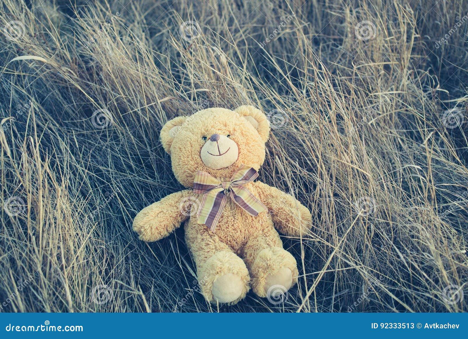 Teddybär betreffen das Gras