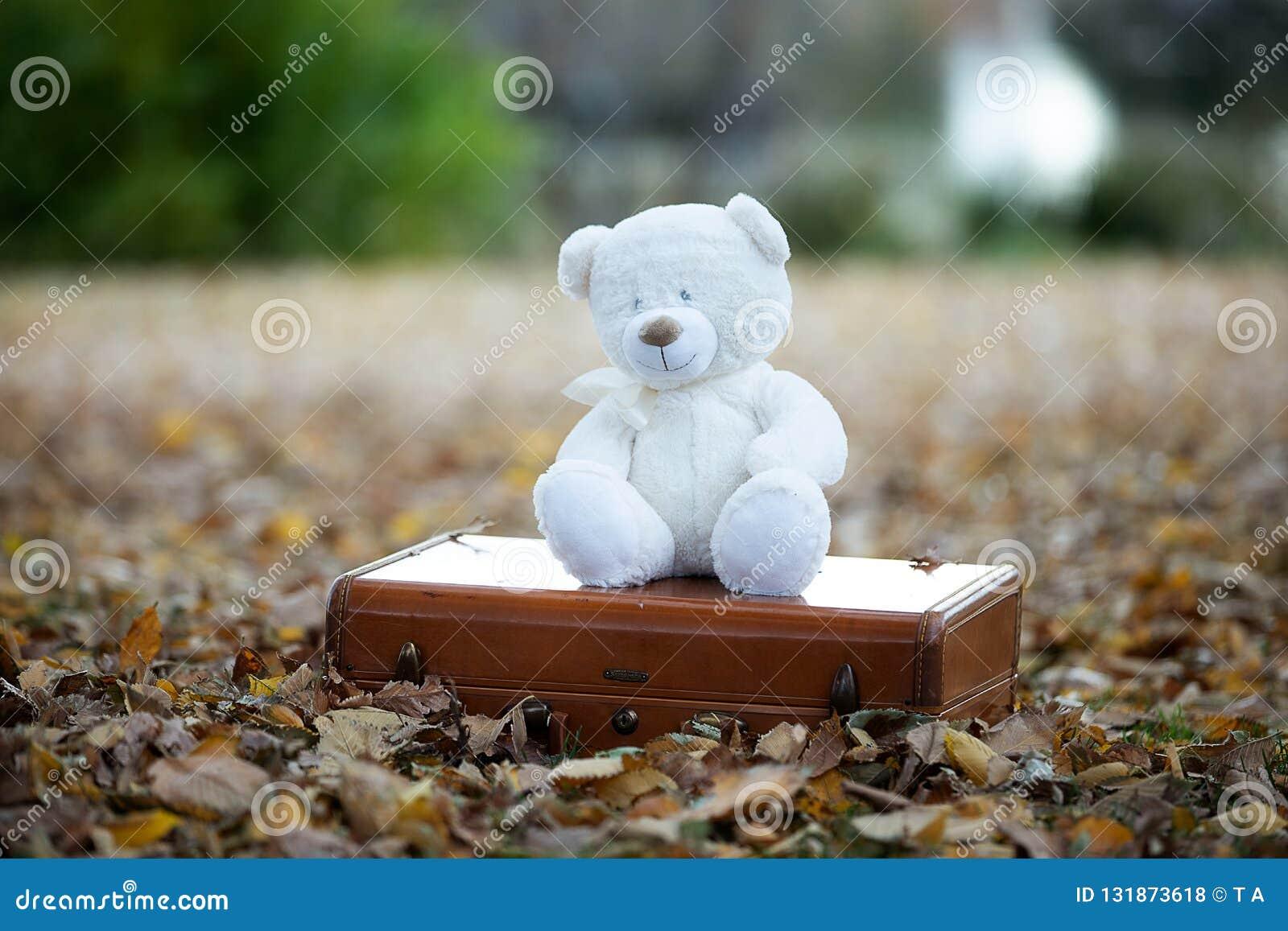 Teddybeer die alleen plaatsen