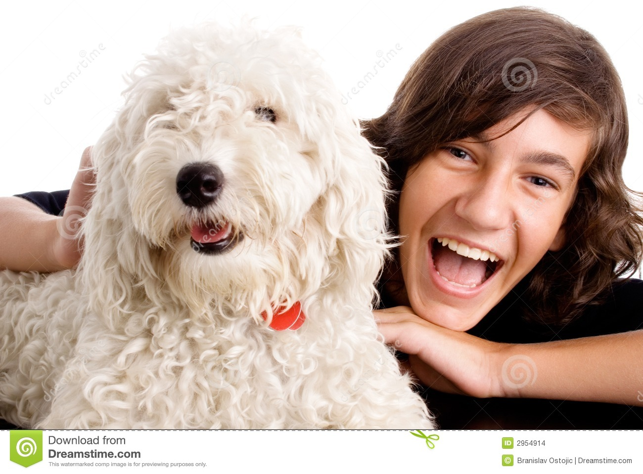 Teen boy with white dog stock photo. Image of smiles, cute - 2954914