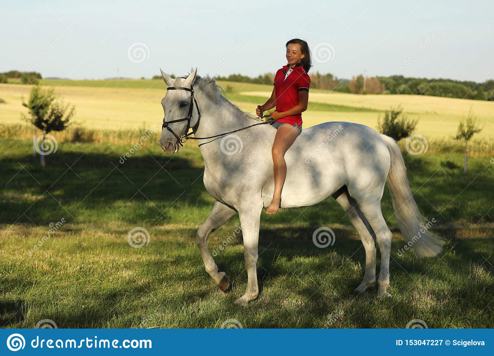 Young girl on roan horse walk on meadow in late afternoon without saddle, sunshine
